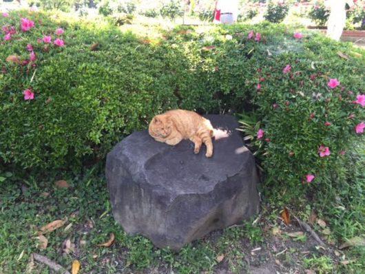 猫(日比谷公園)