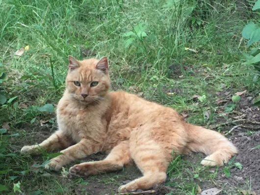 猫(芝公園まったり)1