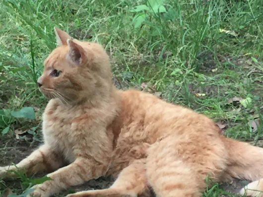 猫(芝公園まったり)2