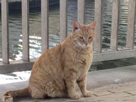猫(芝浦運河)4