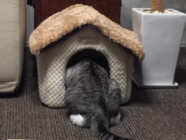 祝・猫の日!? 香港ハンセン指数の2016年11月14日の引け値は22222.22ポイント、日本だったら猫の日!?